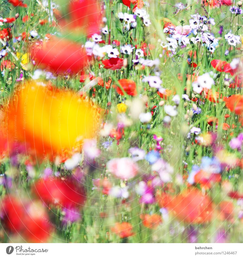 Nature Plant Green Beautiful Summer Flower Red Leaf Yellow Spring Blossom Meadow Grass Garden Park Field