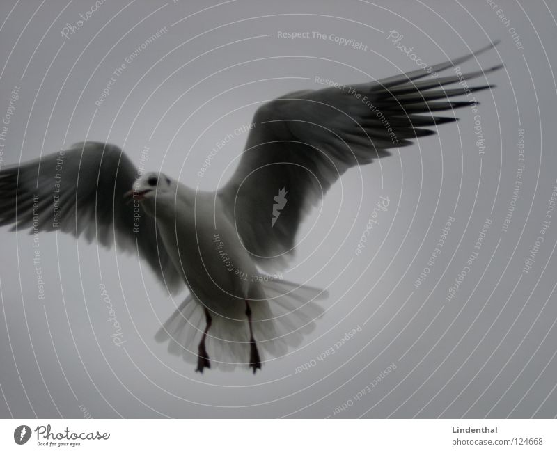 The Light Gull birds Seagull White Dark Hope Peace Bird Black & white photo bw black Flying fly Bright light Lanes & trails