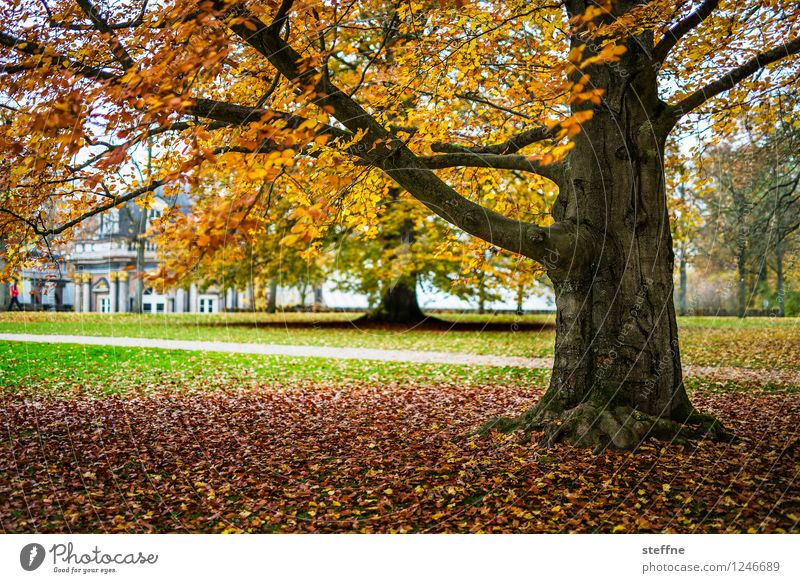 Colourful for life Landscape Autumn Tree Bayreuth Warmth Autumn leaves Tree trunk Autumnal Multicoloured Colour photo Exterior shot