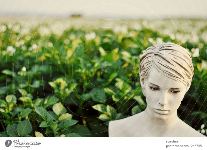 outside, in the potato field. Face Head Doll Mannequin False inanimate Cold Perfect Beautiful Artificial Plastic Potato field Agriculture