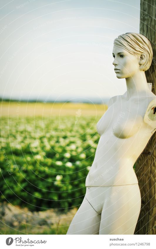 out there, in the potato field. Face Head Doll Mannequin False inanimate Cold Naked Perfect Beautiful Artificial Plastic Potato field Agriculture