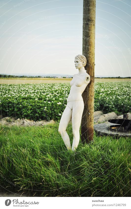 outside, in the potato field ... Face Head Doll Mannequin False inanimate Cold Perfect Beautiful Artificial Plastic Potato field Agriculture Grass Field Legs