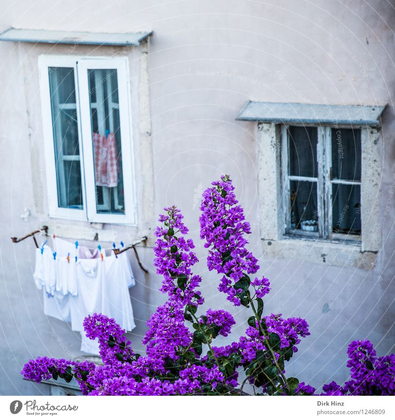 Flowers in front of the window Wall (barrier) Wall (building) Facade Garden Window Tourist Attraction Landmark Monument Gray Violet Pink Dubrovnik