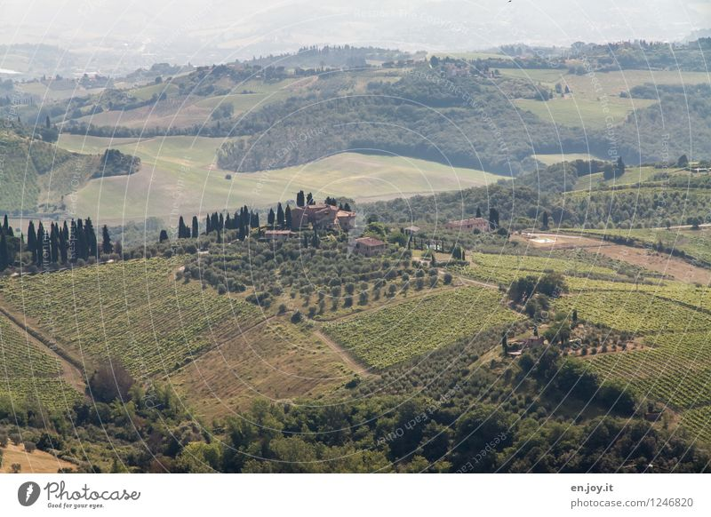 Nature Vacation & Travel Green Summer Landscape Far-off places Field Tourism Idyll Climate Joie de vivre (Vitality) Italy Hill Agriculture Vine Farm