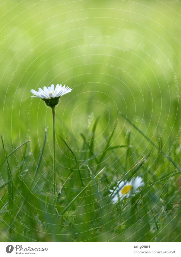 Nature Plant Green Beautiful White Relaxation Flower Blossom Meadow Grass Natural Garden Park Contentment Dream Growth