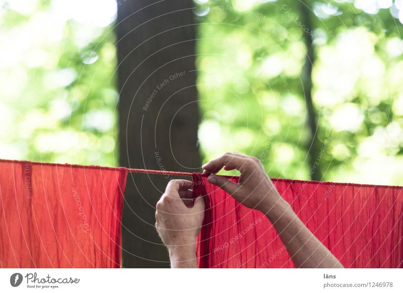 Human being Nature Green Tree Red Hand Forest Environment Life Natural Laundry Clothesline Precision Hang up