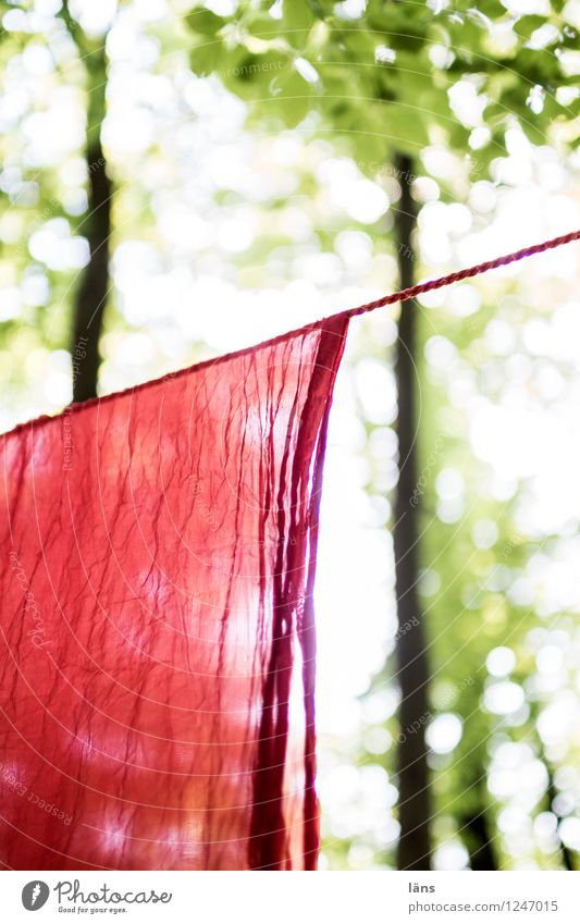 pZ3 l it was summer Environment Summer Forest Hang Rag Clothesline Laundry Bright Tree Exterior shot Deserted Sunlight Shallow depth of field