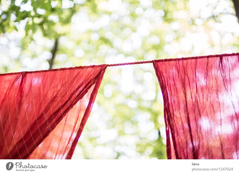 pZ3 l walked in Sun Summer Tree Forest Cloth Red Anticipation Beginning Laundry Clothesline Suspended Hang Droop Come right in Deserted Copy Space top Sunlight