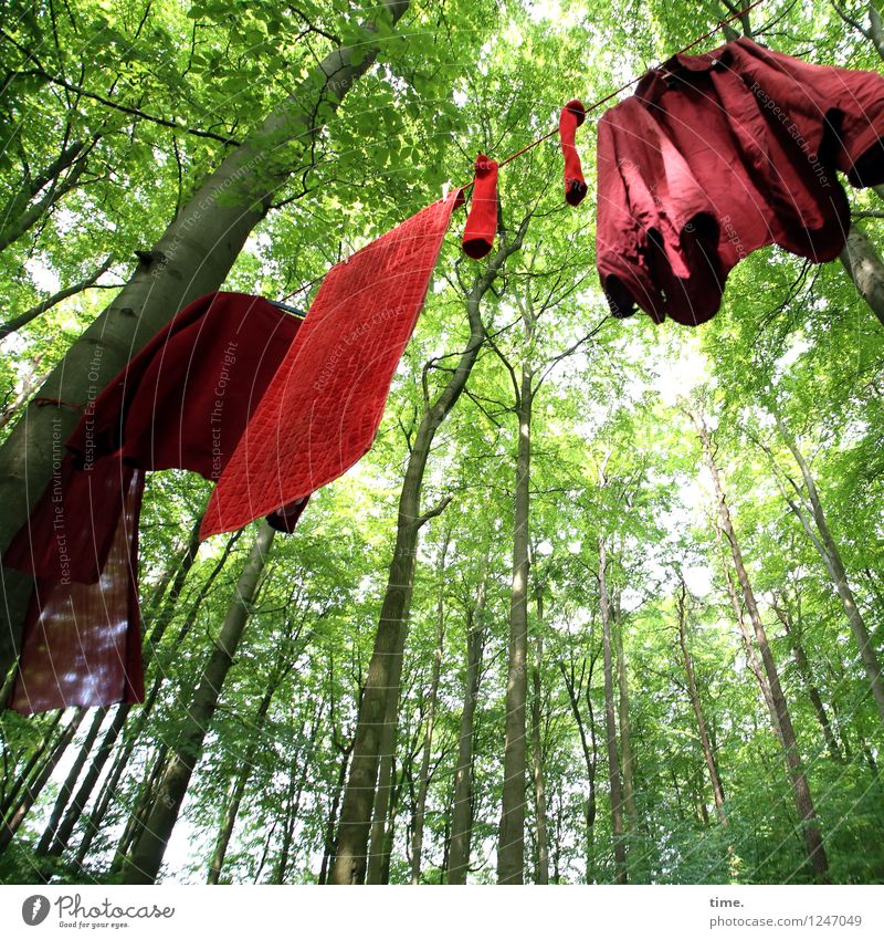 Green Summer Tree Red Leaf Forest Life Art Decoration Modern Crazy Esthetic Creativity Beautiful weather Curiosity Attachment