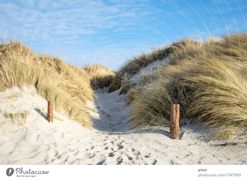 To the beach Relaxation Vacation & Travel Tourism Trip Freedom Summer Summer vacation Sun Beach Ocean Environment Nature Landscape Plant Elements Sand Sky