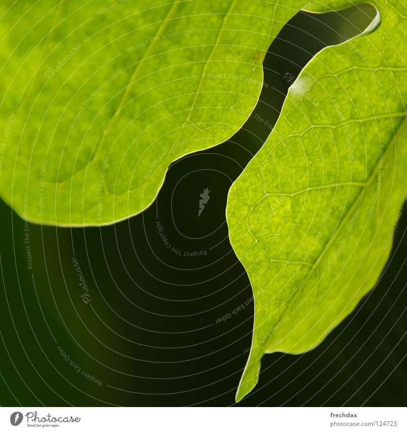 Green Plant Leaf Black Life Round Square Botany Biology Vessel Process Photosynthesis Transform Organic Botanical gardens