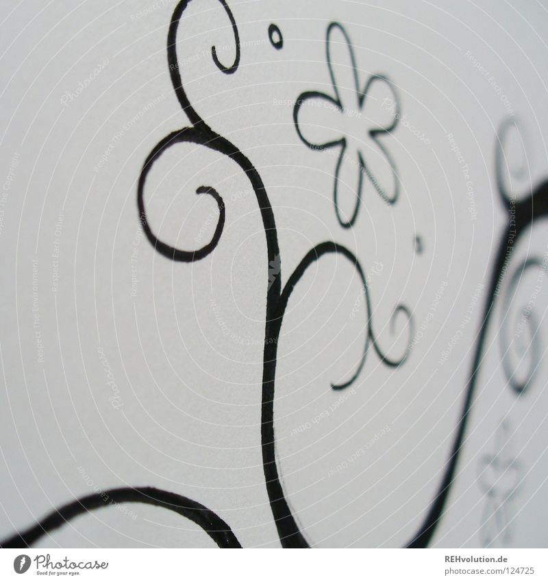 White Flower Joy Black Blossom Line Art Paper Circle Growth Near Leisure and hobbies Image Painting (action, work) Pen Draw