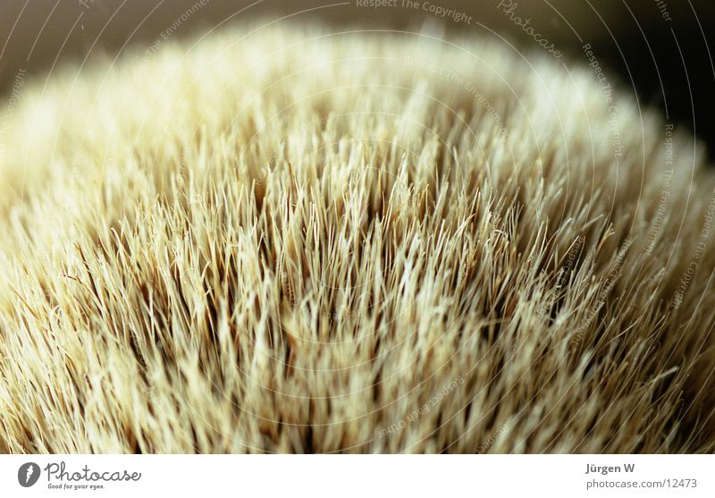 domesticated badger Bathroom Badger Shave Pelt Soft Close-up Living or residing shaving brush Hair and hairstyles Macro (Extreme close-up) deail skin softly