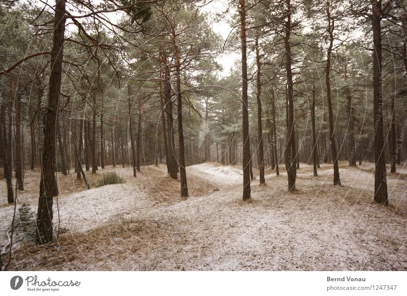 cooling down Environment Nature Landscape Winter Climate Weather Snow Tree Grass Forest Hill Hiking Beautiful Brown Gray Green Pine Direct Calm Clearing Frost