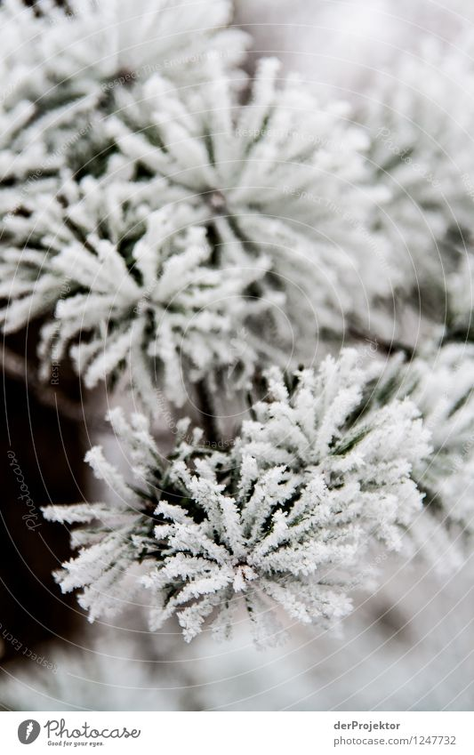 Nature Vacation & Travel Plant Christmas & Advent White Landscape Animal Winter Forest Mountain Environment Emotions Snow Ice Weather Climate