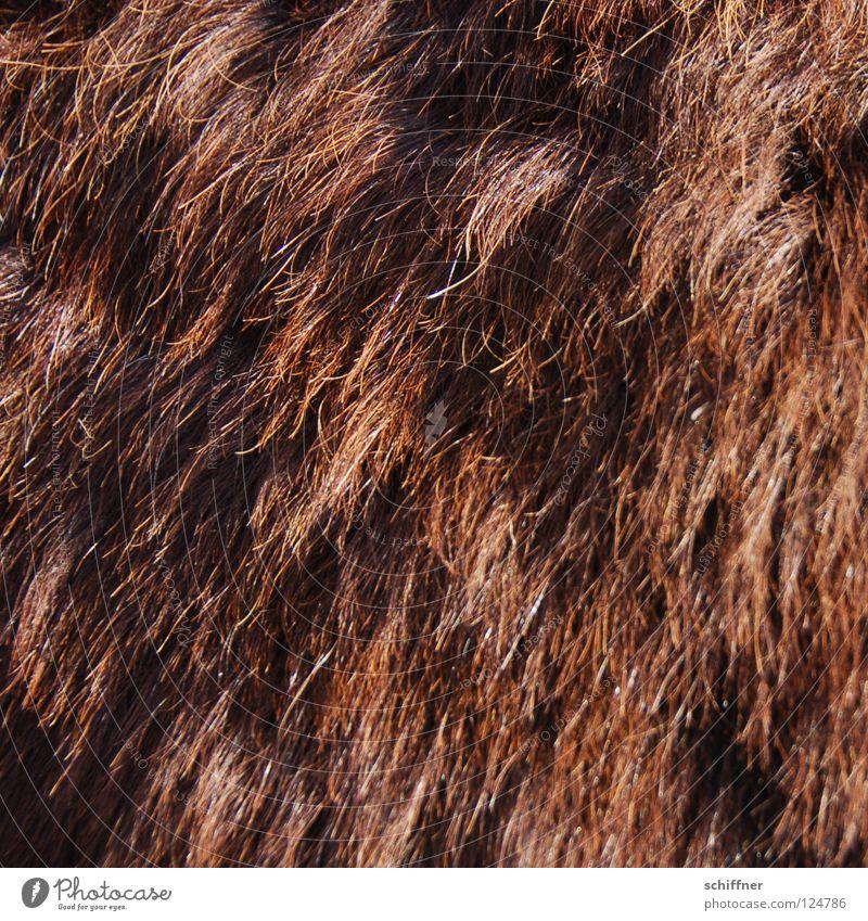 Hair and hairstyles Brown Waves Bushes Pelt Mammal Hairdresser Curl Wool Donkey Bristles Plant Bushy Auburn Shaggy hair