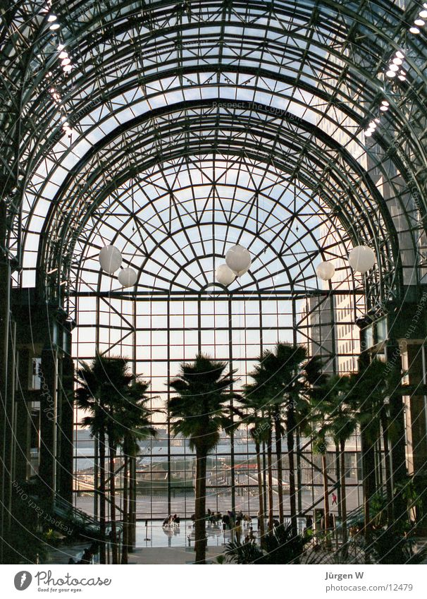 Window Architecture Glass USA Palm tree New York City Manhattan Delicate Glas facade Steel construction Atrium Glass roof