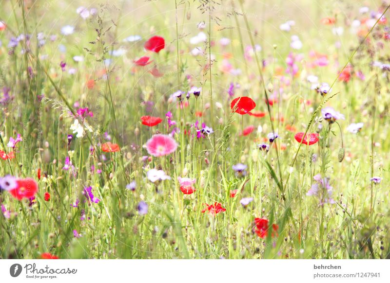 beautiful mo(h)ntag everyone! Nature Plant Spring Summer Beautiful weather Flower Grass Leaf Blossom Wild plant Poppy Garden Park Meadow Blossoming Faded Growth