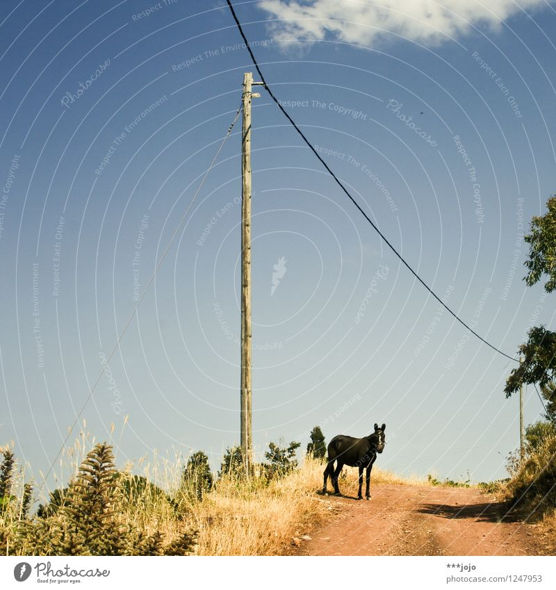 Vacation & Travel Summer Animal Far-off places Travel photography Lanes & trails Trip Beautiful weather Adventure Footpath Pet Electricity pylon Rural Greece
