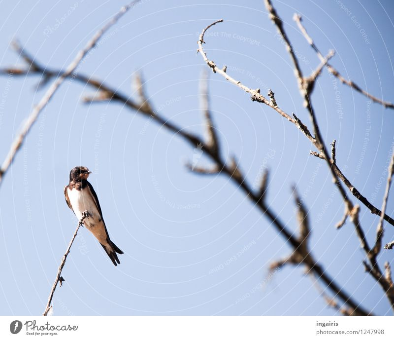 Sky Nature Blue White Relaxation Animal Black Life Natural Small Gray Bird Contentment Gloomy Wild animal Authentic