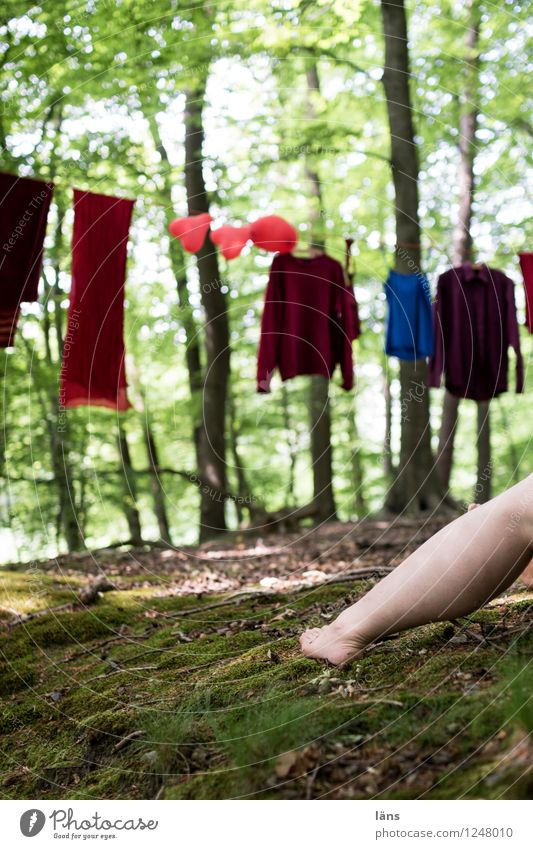 pZ3 l red cap and the evil wolf Human being Life Legs 1 Environment Nature Summer Tree Forest Shirt Sweater Expectation Clothesline Hang Exterior shot