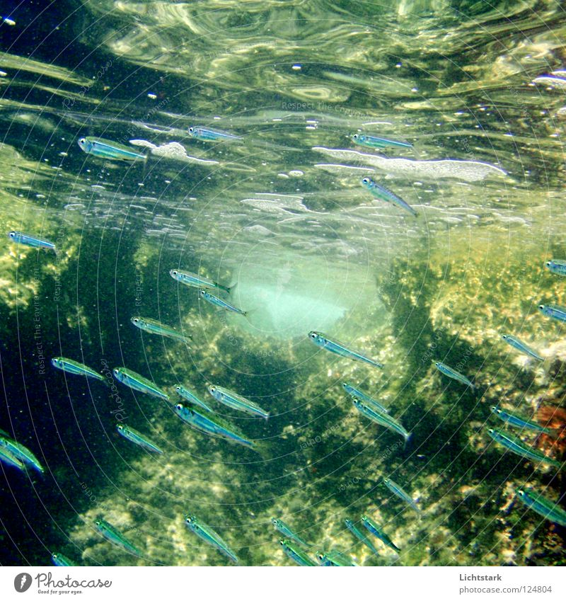 Blue Water Green Vacation & Travel Ocean Joy Colour Calm Freedom Movement Waves Swimming & Bathing Power Energy industry Fish Dive