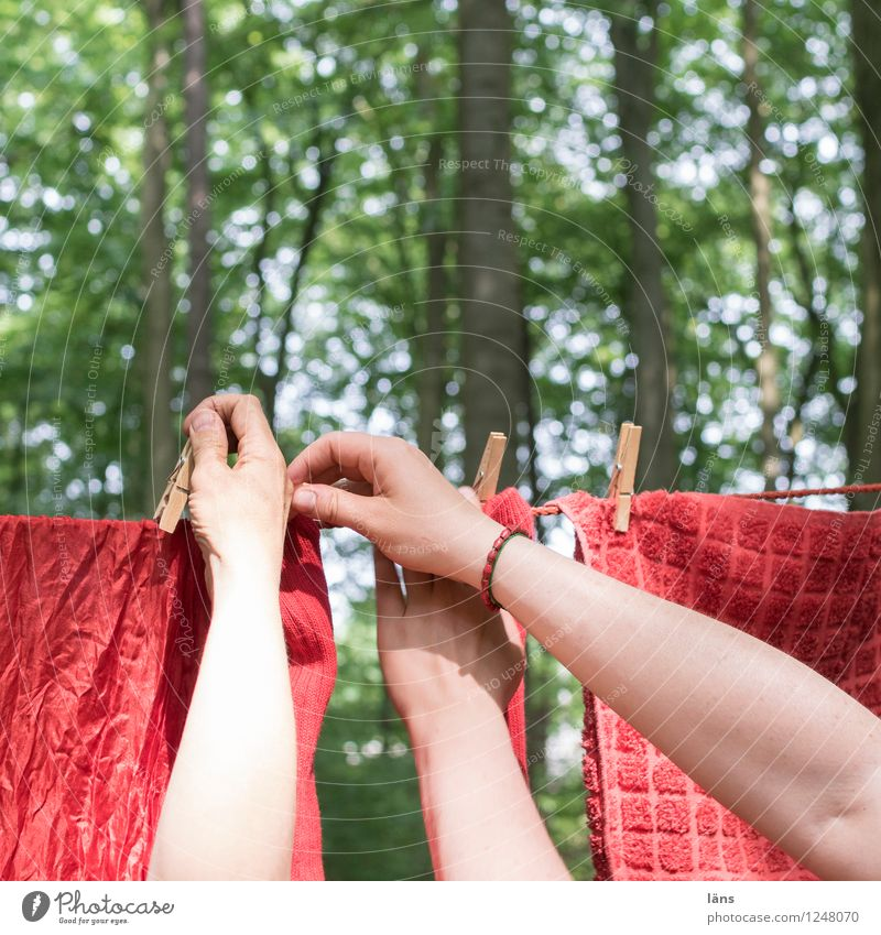 pZ3 l cooperation Rope Human being Life Hand 2 Environment Nature Summer Forest Green Red Attachment Laundry Teamwork Clothes peg Clothesline To hold on