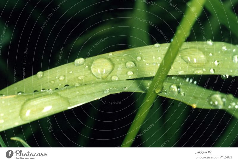 Nature Water Green Plant Grass Drops of water Wet Dew