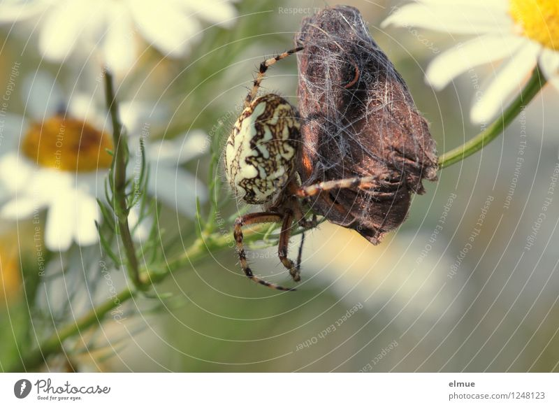 Nature Animal Meadow Death Brown Contentment Field Power Success Appetite Catch Butterfly Effort Competition Feeble Spider