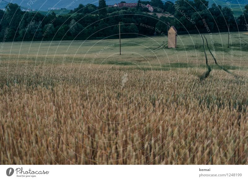 In field II Food Environment Nature Landscape Summer Plant Tree Agricultural crop Field Barleyfield Grain Grain field Tower Tracks Growth Authentic Dark Moody