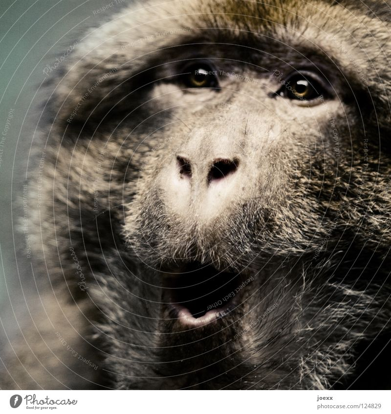 Animal Eyes Hair and hairstyles Mouth Fear Pelt Surprise Mammal Panic Monkeys Amazed Frightening Marvel Helpless O Scare