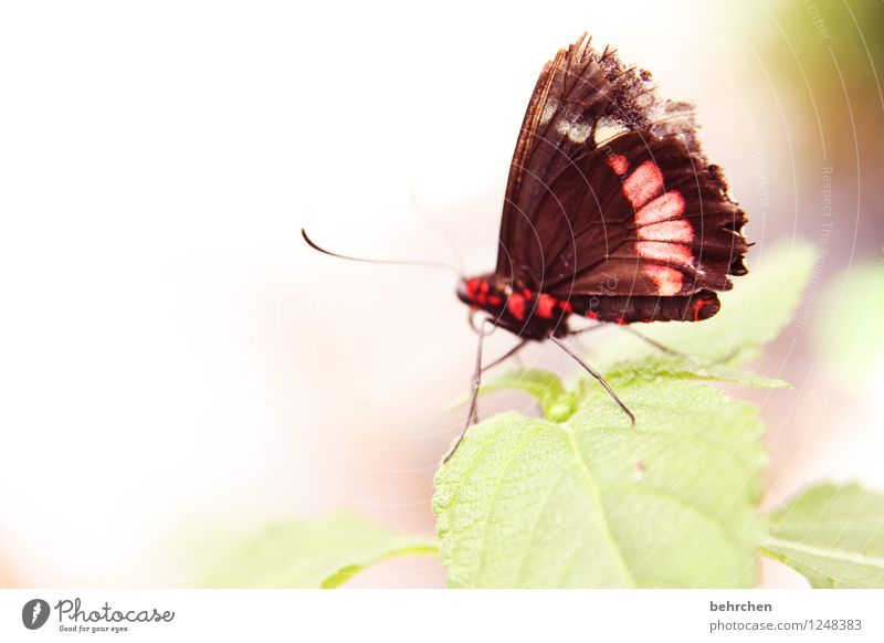 tousled Nature Plant Animal Spring Summer Tree Leaf Garden Park Meadow Wild animal Butterfly Wing 1 Relaxation Flying To feed Sit Exceptional Elegant Exotic