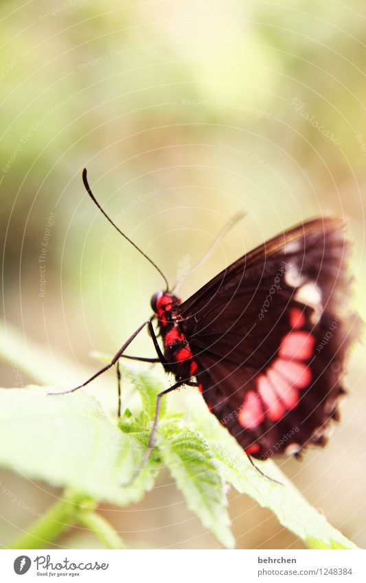 Toxic? Nature Plant Animal Tree Bushes Leaf Garden Park Meadow Wild animal Butterfly Wing Feeler Legs 1 Observe Relaxation Flying To feed Exceptional Elegant