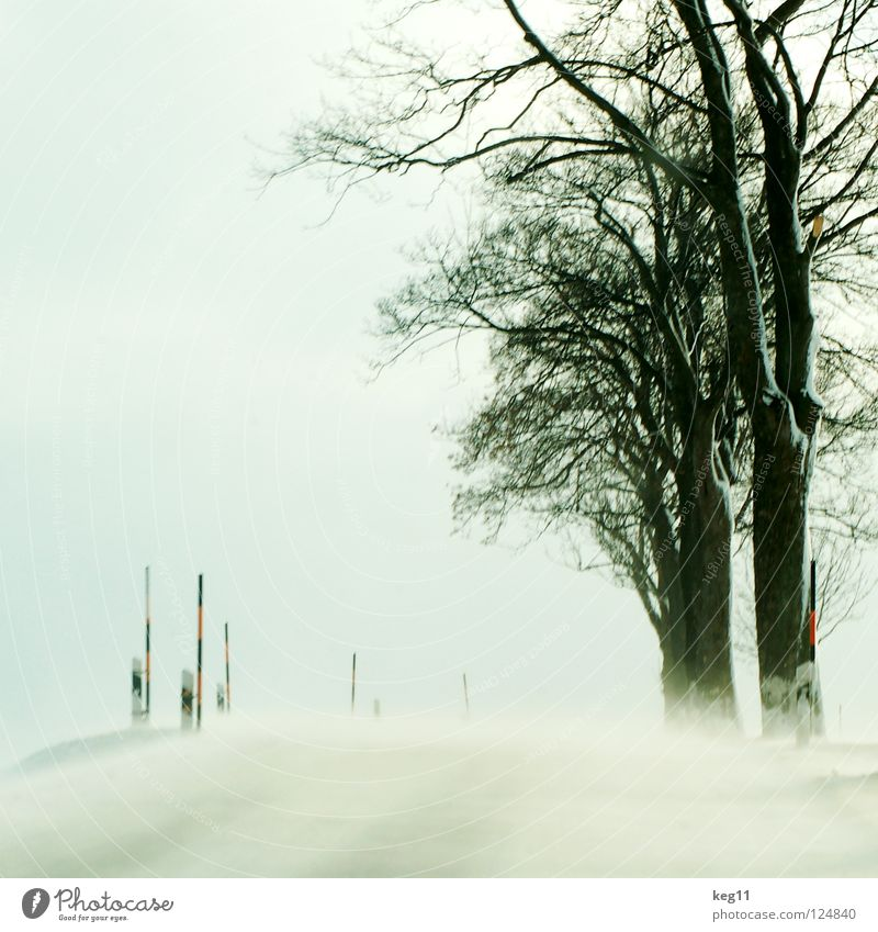 Test Drive pt.III Winter White Forest Tree Tree trunk Branchage Treetop Cold Erz Mountains Field Snowstorm Sanddrift Offroad vehicle Avenue Country road Speed