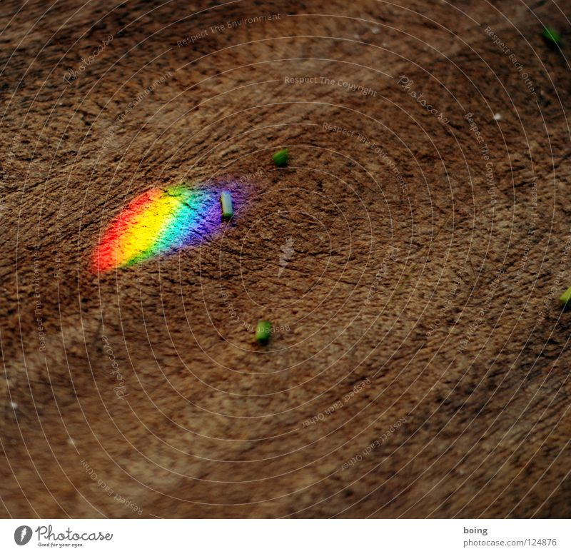 dried herbs Rainbow Refraction Prism Prismatic colour Light Radiation Halo RGB Green Yellow Red Mix Multicoloured Symbols and metaphors Tolerant Versatile Hope