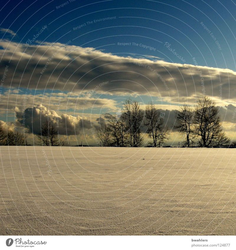 last snow? Winter Clouds White Tree Structures and shapes Horizon Flat Loneliness Sky Snow Blue Sun Far-off places