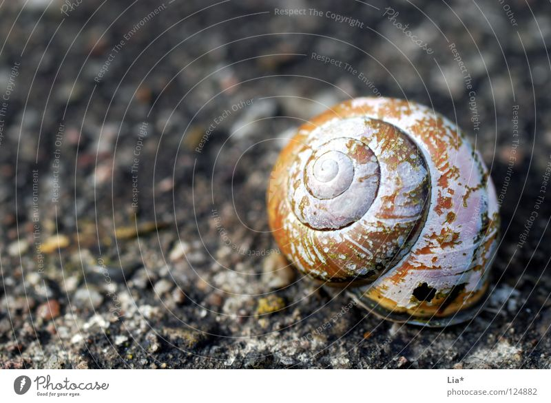 rough ruin Snail shell House (Residential Structure) Ruin Empty Broken Spiral Rotated Lime Hard Grief Uninhabited Derelict Flake off Round Find Discovery Dry