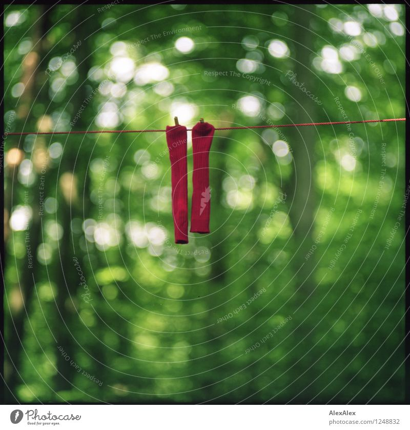 pZ3 | Couple Environment Nature Landscape Plant Tree Forest Stockings Clothesline Rope Holder Clothes peg red socks Hang Esthetic Cool (slang) Fat Together