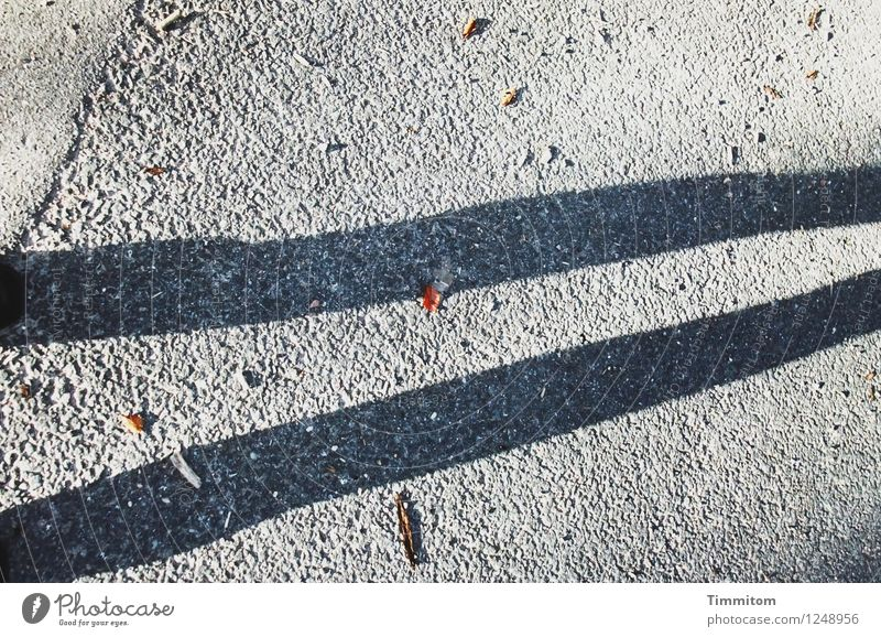 Skinny Legs. Autumn Leaf Street Footwear Line Looking Stand Esthetic Simple Brown Gray Black Considerable Shadow Thin Colour photo Exterior shot Deserted