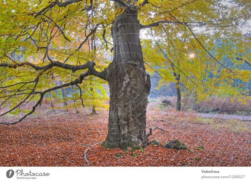 Tree in autumn Nature Sun Sunlight Autumn Forest Brown Yellow Gold Green Pink Red Colour photo Exterior shot Deserted Copy Space bottom Day Sunbeam Back-light