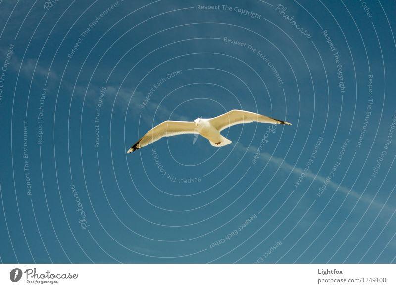 Heaven Ocean Loneliness Animal Far-off places Bird Elegant Fly Wanderlust Departure