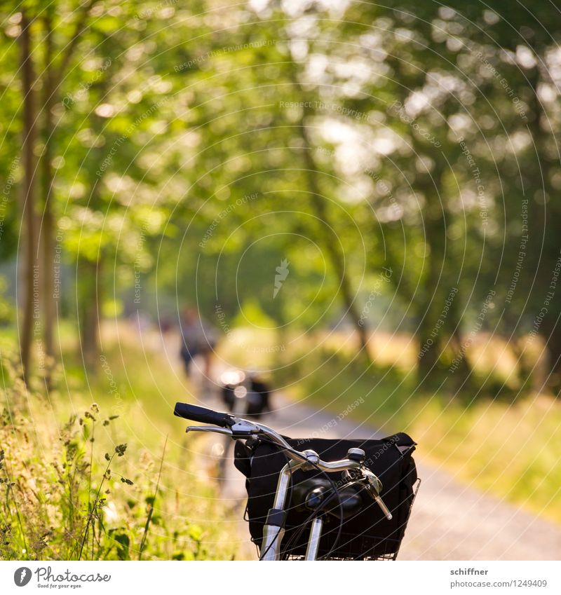Nature Vacation & Travel Summer Sun Tree Landscape Calm Forest Meadow Grass Leisure and hobbies Field Tourism Bicycle Bushes Trip