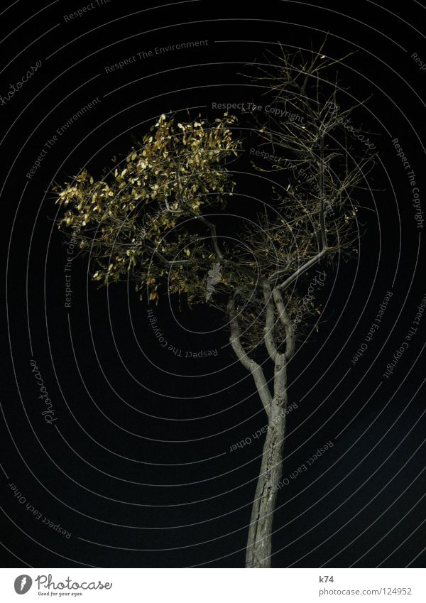 Barcelona Port II Night Black Dark Artificial light Lighting Tree Winter Independence Loneliness Individual Uniqueness Ambitious Branched Leaf stand-alone