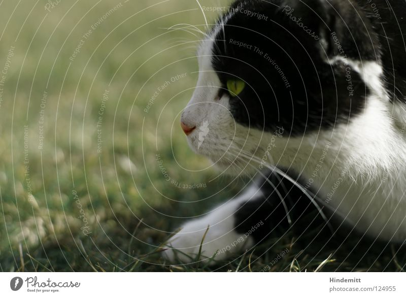 Cat White Green Summer Black Meadow Warmth Grass Hair and hairstyles Jump Nose Ear Physics Beautiful weather Concentrate Hunting