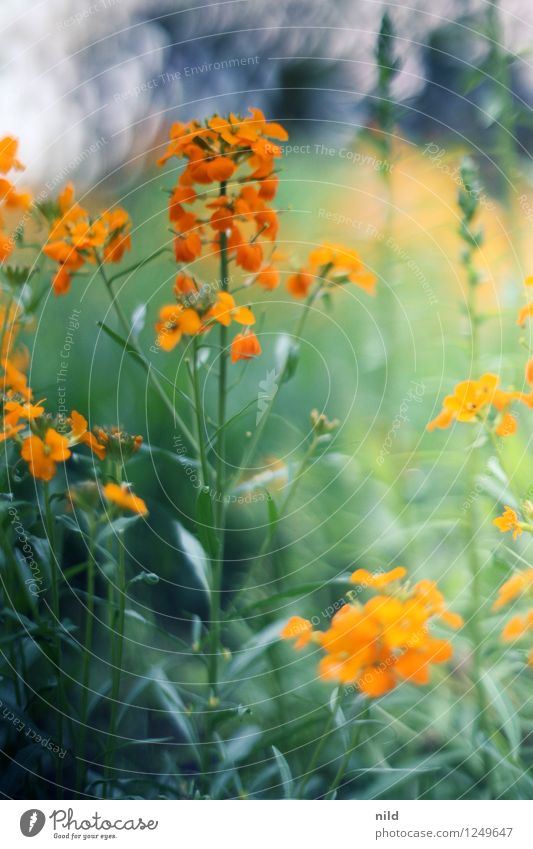play of colours Environment Nature Plant Spring Summer Beautiful weather Flower Blossom Garden Orange Esthetic Front garden Colour photo Multicoloured