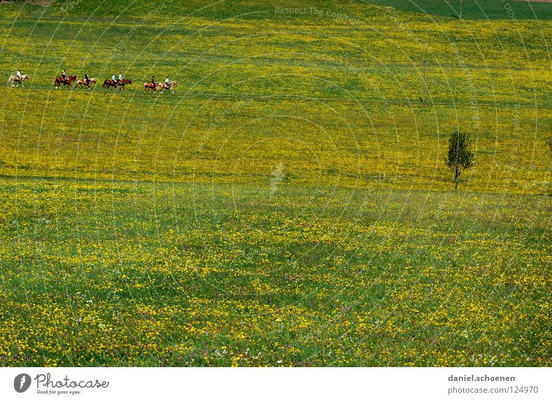won't last long ! Summer Spring Background picture Horse Flower meadow Beautiful Meadow Leisure and hobbies Blossom Green Yellow Dandelion Relaxation Horizon