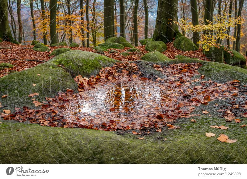sea of rocks Nature Landscape Plant Elements Moss Forest Rock Vacation & Travel Hiking Tourism mossy rocks Odenwald Autumn foliage stones Colour photo
