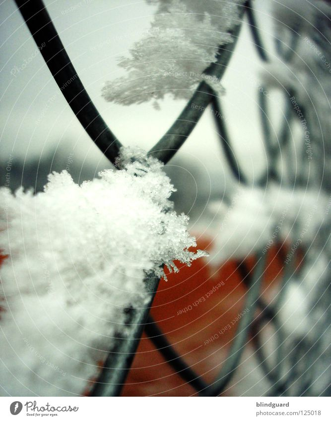 Winter Cold Snow Movement Ice Lie Frost Break Fence Wire Tennis Close Frustration Express train Exclusion Ball sports