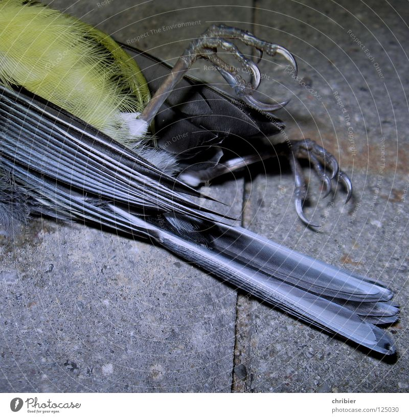 Blue Animal Black Yellow Death Gray Sadness Bird Flying Gloomy Feather Wing Transience Grief Protection Divide