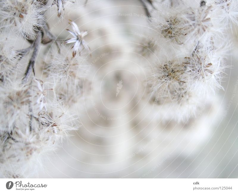 winter bloom Plant Blossom Flower Bushes Grass Near Beige White Brown Tone-on-tone Monochrome Blur Delicate Small Soft Airy Easy Dry Sensitive Concentrate